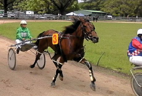 RIGHT: The trotting program was among the highlights of the show with competitors vying for a $7500 first prize.