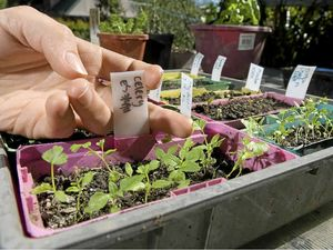 Permaculture Noosa helps grow your plant knowledge