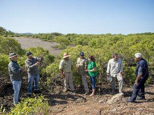 Group maps Gladstone's mangroves 'like Google Street View'