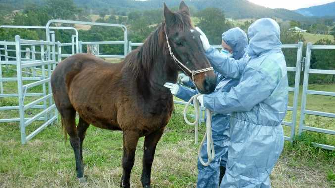 November 16-23 is Antibiotic Awareness Week, with a focus on horses and livestock.