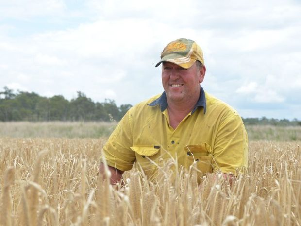 A GOOD YEAR: Haly Creek landowner Trevor Black is in the middle of harvest.Photo Rhiannon Tuffield / South Burnett Times