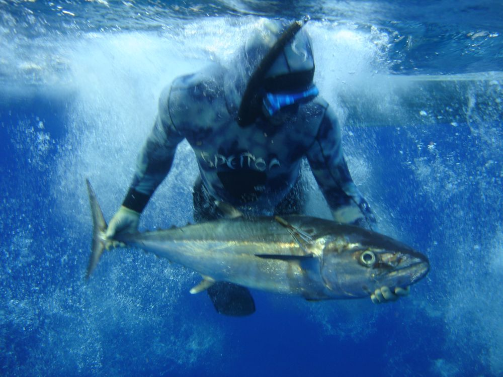 Blue water diving will often get you some cracking fish, but you will need a boat to find them