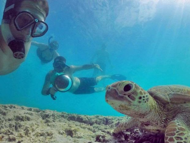 Mark Fitzpatrick took a selfie with a turtle on Lady Musgrave Island during the Underwater Instameet on Saturday. Photo: Mark Fitz Photography