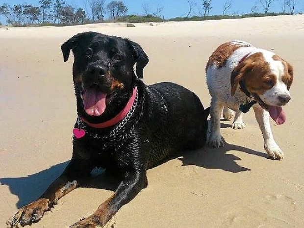 INSEPARABLE: Bailey and Charlie and are in need of a new home.