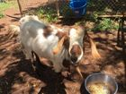 CUTE: Dogs, cats (even a goat) they all need a home