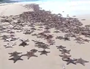 WATCH: Thousands of starfish stranded on Moreton Island