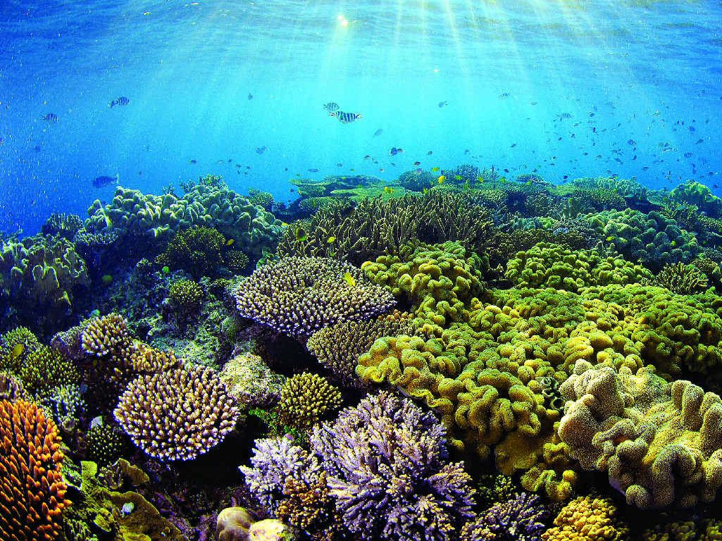 They call it God's aquarium and once you dive the Great Barrier Reef you will understand why.