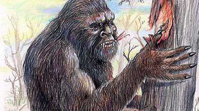 CAPTURED: A yowie with a tracking device inserted in its back is being monitored in the bush according to a leading researcher, but ASIO says otherwise.