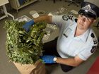 Sergeant Dan Curtin with a drug haul at Toowoomba Police Station . Friday, Nov 27, 2015 . Photo Nev Madsen / The Chronicle
