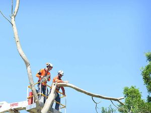 Action on Nelson trees