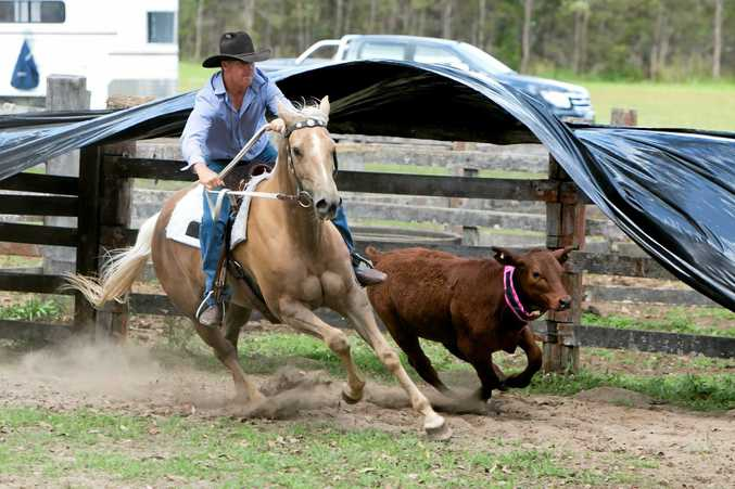 Team penner Brendan Moran competes on his palomino at Glenreagh Recreation Ground.