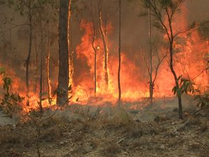 Wildfire burning in Wondai State Forest