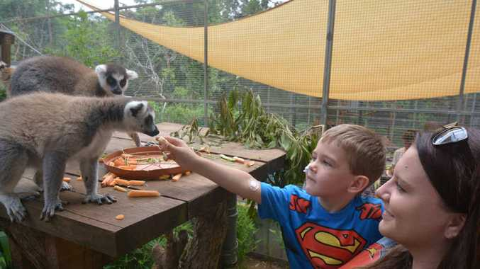 PRECIOUS MEMORIES TO CHERISH: Queensland Zoo's lemurs are a favourite for Miller O'Flynn and his mum, Sophie Cashen.