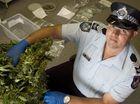 Raids net police 8kg of cannabis from around Toowoomba