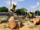 Crews cut trees felled by storms on Brisbane Terrace in Goodna on Monday morning.