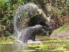 Croc v croc fight to the death captured on film