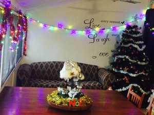 Gladstone Christmas trees