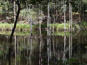 Northern Rivers bushland projects gain big funding