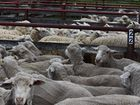 ANOTHER interesting, but positive week in the wool industry.