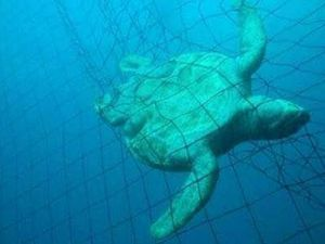 OPINION: Calls to end shark netting