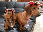 GALLERY: Dogs, kids, workers and ex-locals in #hatsforharry