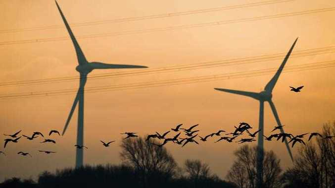 Grey geese (Anser anser) fly past a high-tension power line and wind turbines in the morning sun near Sehnde, Germany, 26 November 2015.