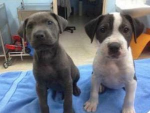 Prisoners and puppies join forces in proposed pound plan