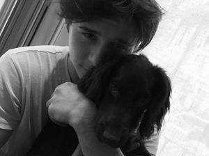 Beckham's dog joins Instagram, has 51k followers already