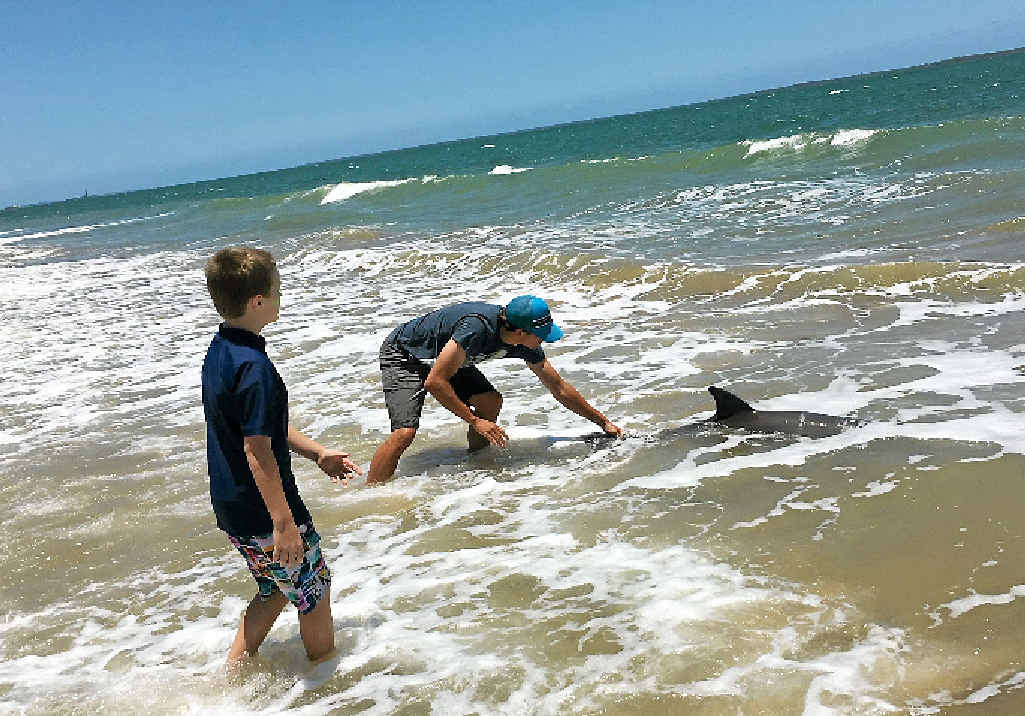 Louis Cattermole taking care of the stranded bottlenose dolphin at Lilleys Beach on Tuesday. Contributed, Barrie Cattermole