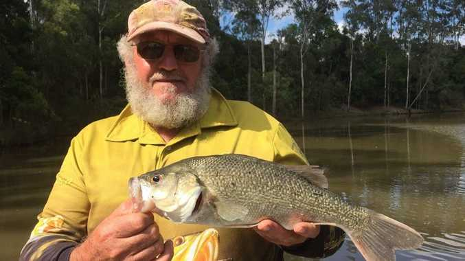 Warren Drury got out for a quick fish up towards Tiaro and landed this bass on the polular black and white Heddon Torpedo surface lure.