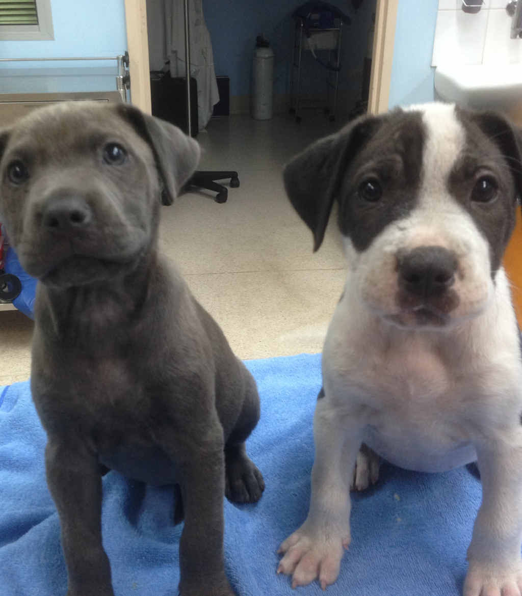 IN VAIN: These two puppies were euthanised after contracting parvovirus, despite rescue organisation Fresh Start offering to pay for treatment.