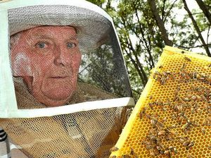 Coast beekeepers to tap into lucrative manuka honey market