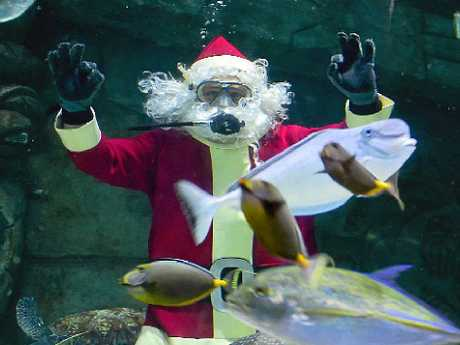 WATER WONDER: Santa dropped in to Sea Life Mooloolaba to drop off some fishy presents ahead of his busy schedule.