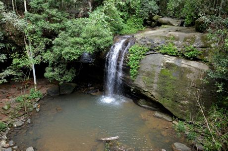 Serenity Falls at Buderim Forest Park has been closed for swimming Photo: Warren Lynam / Sunshine Coast Daily