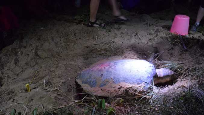 Turtles attract thousands of tourists to our region every year, but a stray plastic bag can leave them dead.