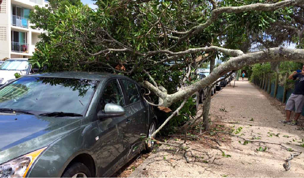 CRUNCH: A Maroochydore tree made a spectacular landing, thankfully without causing injury.