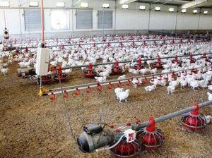 Residents raise concerns over chook farms