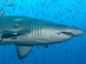 CAUGHT: Activists and shark net contractors clash on camera