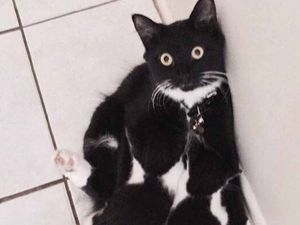 GALLERY: Readers share their purrfect cat pictures online