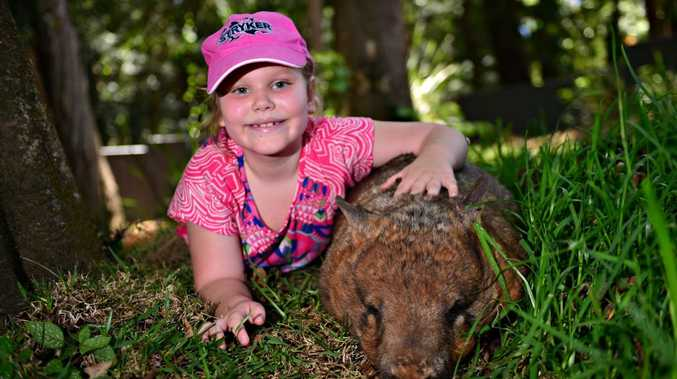 Ava Bradshaw at Queensland Zoo with Grotte, a Southern Hairy Nose Wombat.
