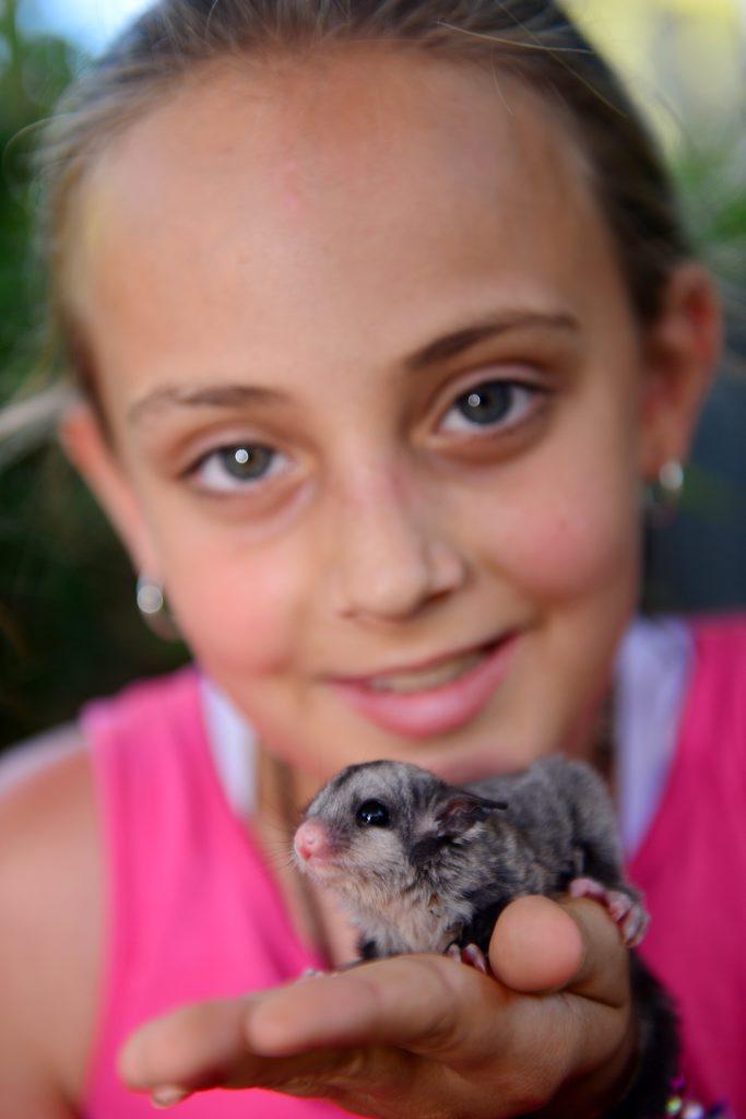 Isabella Lesk, 10 at Queensland Zoo witha Sugar Glider.