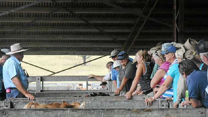 NEW YEAR, NEW OUTLOOK: Bill Hallas sells to a crowd of buyers at Gatton Saleyards in previous years.