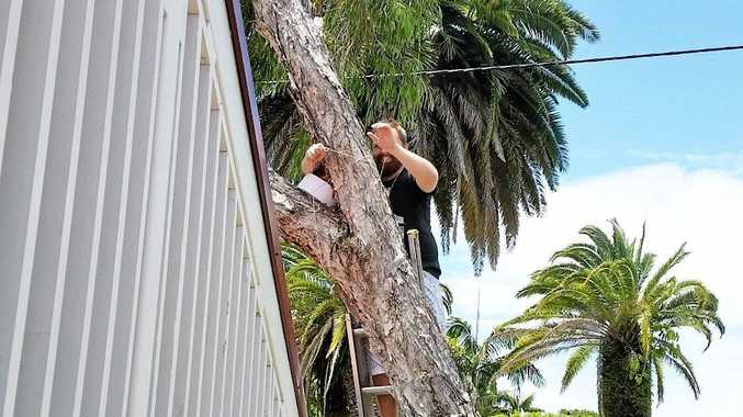It took the tourists, neighbours, WIRES rescuers and workers from Essential Energy to reunite the fallen young kookaburra with its family.