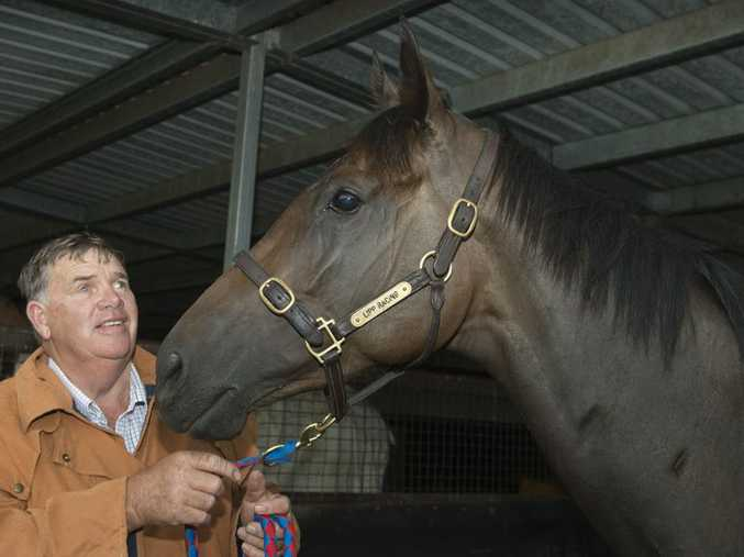 Toowoomba mare Tinto and trainer Rex Lipp preparing this week for today's Magic Millions Stayers Cup at the Gold Coast.