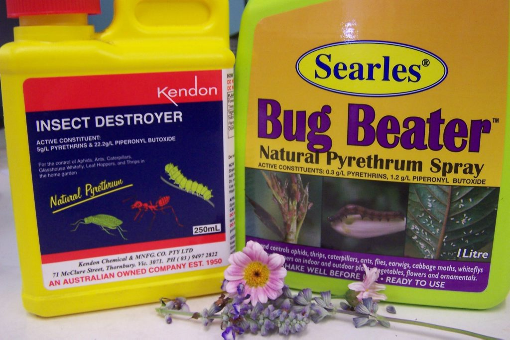 Pyrethrum provides safer pest control   Sunshine Coast Daily