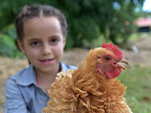 Kids awards to teach youngsters how to care for chooks