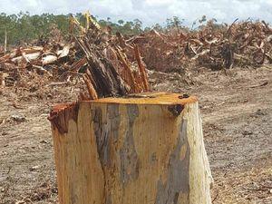 Biodiversity felled for Peregian Springs housing estate