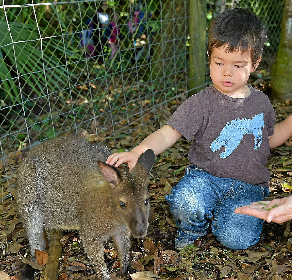 A FRIENDLY PAT: Eden McAuslan gets up close with the native animals at Queensland Zoo.