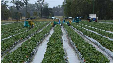 A fruit and vegetable picking firm is accused of ripping off workers.