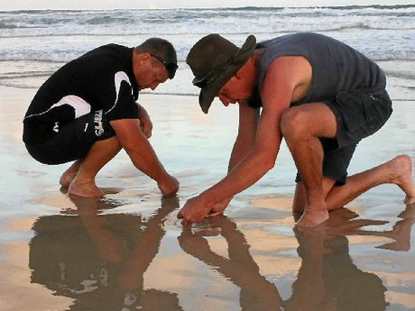 Jeff Skilton and Glen Gollschewsky trying to catch beach worms.